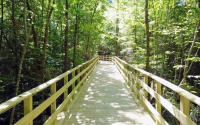 Introducing Pinegrove Campground's Twin Pine Boardwalk